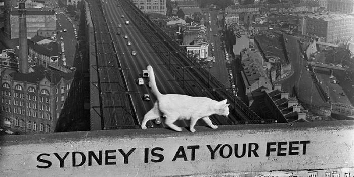 gatto-sydney.jpg